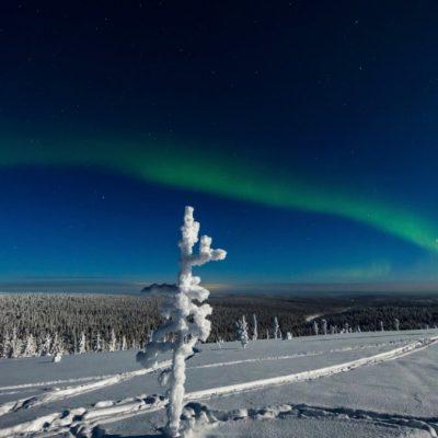 Polarlicht Aurora Borealis | Foto: Thomas Niedermüller – www.niedermueller.de